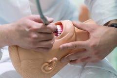 Αρσενική οδοντική άσκηση σπουδαστών στην κούκλα Στοκ Φωτογραφία