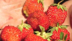 Αρσενικοί φοίνικες που παρουσιάζουν juicy νόστιμες φράουλες το καλοκαίρ απόθεμα βίντεο