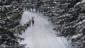 Αρσενικός αθλητής που τρέχει στο χιονώδες χειμερινό πεύκο δασικό Jogging υπαίθρια Κίνητρο φιλμ μικρού μήκους