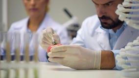 Αρσενικός επιστήμονας που εξετάζει το δείγμα και που εγχέει την ντομάτα με τις χημικές ουσίες απόθεμα βίντεο