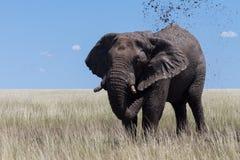 Αρσενικός ελέφαντας σε μια τρύπα λάσπης, εθνικό πάρκο Etosha Στοκ εικόνες με δικαίωμα ελεύθερης χρήσης
