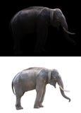 Αρσενικός ελέφαντας στο σκοτεινό και άσπρο υπόβαθρο Στοκ Εικόνες