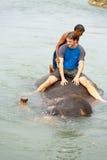 Αρσενικός καταδυμένος τουρίστας ποταμός Νεπάλ γύρου ελεφάντων στοκ εικόνες
