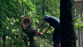 Αρσενικός κηπουρός που εργάζεται στο καταρριφθε'ν δέντρο με το πριόνι αλυσίδων απόθεμα βίντεο