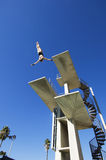 Αρσενικός κολυμβητής που βουτά στον αέρα Στοκ εικόνα με δικαίωμα ελεύθερης χρήσης