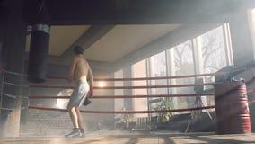Αρσενικός μπόξερ που χορεύει στο δαχτυλίδι μπόξερ απόθεμα βίντεο