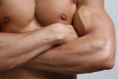 αρσενικός μυϊκός κορμός Στοκ Φωτογραφία