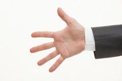 αρσενικός φοίνικας Στοκ φωτογραφία με δικαίωμα ελεύθερης χρήσης