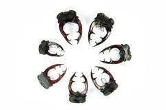 αρσενικό ελάφι κέρατων κα&n στοκ εικόνες με δικαίωμα ελεύθερης χρήσης