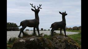 αρσενικό ελάφι ελάφων Στοκ φωτογραφία με δικαίωμα ελεύθερης χρήσης