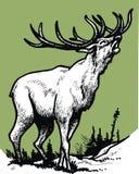 Αρσενικό ελάφι που απομονώνεται στο πράσινο υπόβαθρο Στοκ Εικόνες
