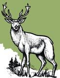 Αρσενικό ελάφι στο πράσινο υπόβαθρο Στοκ φωτογραφίες με δικαίωμα ελεύθερης χρήσης