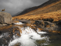 Αρσενικό ελάφι στο Glen Rosa - νησί Arran - της Σκωτίας Στοκ Εικόνες