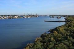 αρσενικό (ζώο) ποταμών Στοκ Εικόνες