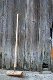 αρσενικό (ζώο) τιτιβίσματο&si Στοκ εικόνες με δικαίωμα ελεύθερης χρήσης