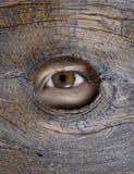αρσενικό (ζώο) τιτιβίσματο&si Στοκ Εικόνες