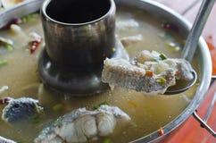 αρσενικό (ζώο) ψαριών yum Στοκ Φωτογραφίες