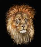 Αρσενικό λιοντάρι Διανυσματική απεικόνιση