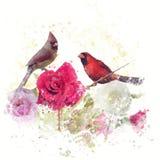 Αρσενικό και θηλυκό βόρειο watercolor καρδιναλίων Στοκ εικόνες με δικαίωμα ελεύθερης χρήσης