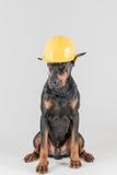 Αρσενικό μαύρο σκυλί με το κίτρινο καπέλο κατασκευής Στοκ φωτογραφίες με δικαίωμα ελεύθερης χρήσης