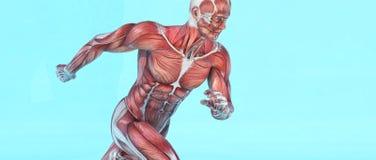 Αρσενικό μυϊκό τρέξιμο συστημάτων διανυσματική απεικόνιση