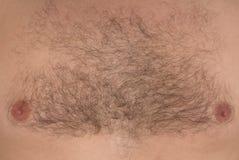 Αρσενικό στήθος τρίχας στοκ φωτογραφία με δικαίωμα ελεύθερης χρήσης