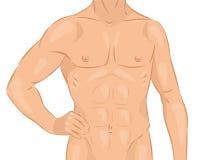 αρσενικό σωμάτων γυμνό Στοκ Εικόνες