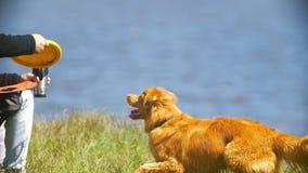 Αρσενικό χέρι που ρίχνει το frisbee για το χαριτωμένο σκυλί υπαίθρια απόθεμα βίντεο