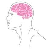 Αρσενικό χρώματος εγκεφάλου Στοκ Φωτογραφίες
