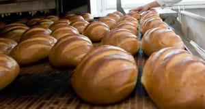 Αρτοποιείο ψωμιού Στοκ Εικόνες