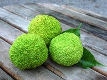 Αρτόκαρποι - Artocarpus altilis Στοκ Εικόνα