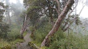Αρχέγονο δάσος στο Νεπάλ απόθεμα βίντεο