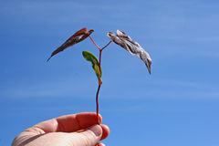 αρχίζοντας νέο δέντρο στοκ φωτογραφία με δικαίωμα ελεύθερης χρήσης