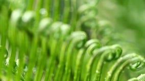 Αρχίστε των φύλλων και του αέρα cycads απόθεμα βίντεο