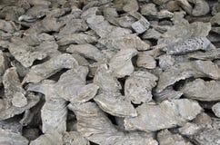 Αρχαία απολιθώματα στρειδιών Στοκ εικόνα με δικαίωμα ελεύθερης χρήσης