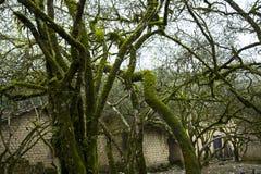 αρχαία δέντρα Στοκ εικόνες με δικαίωμα ελεύθερης χρήσης