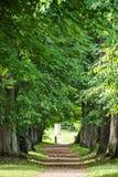 αρχαία δέντρα Στοκ εικόνα με δικαίωμα ελεύθερης χρήσης