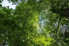 αρχαία δέντρα Στοκ Εικόνα