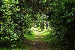 αρχαία δέντρα Στοκ φωτογραφίες με δικαίωμα ελεύθερης χρήσης