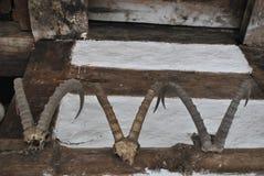 Αρχαία κέρατα αιγών σε έναν ναό σε Himachal Στοκ Φωτογραφίες