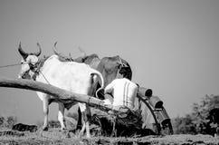 Αρχαία νερό-ρόδα στο Gujarat, Ινδία Στοκ Φωτογραφία