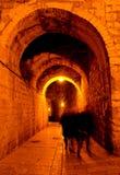 Αρχαία πόλη της Ιερουσαλήμ τη νύχτα Στοκ εικόνες με δικαίωμα ελεύθερης χρήσης