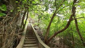 Αρχαία σκάλα στο δάσος φιλμ μικρού μήκους
