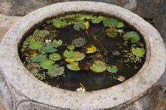 Αρχαία στρογγυλή λεκάνη νερού με τους κρίνους νερού Στοκ φωτογραφία με δικαίωμα ελεύθερης χρήσης