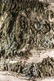 αρχαία φλοιών χειρόγραφα κατασκευής υποδημάτων σημύδων εσωτερικά που άλλα χρησιμοποιημένα χρόνοι εργαλεία ήταν Στοκ φωτογραφία με δικαίωμα ελεύθερης χρήσης