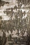 αρχαία φλοιών χειρόγραφα κατασκευής υποδημάτων σημύδων εσωτερικά που άλλα χρησιμοποιημένα χρόνοι εργαλεία ήταν Στοκ Εικόνα
