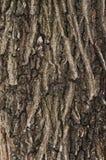 Αρχαία όμορφη σύσταση δέντρων Στοκ Εικόνα