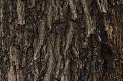 Αρχαία όμορφη σύσταση δέντρων Στοκ φωτογραφίες με δικαίωμα ελεύθερης χρήσης