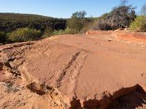 Αρχαίες διαδρομές eurypterid από 400 εκατομμύρια πριν από χρόνια, εθνικό πάρκο Kalbarri, δυτική Αυστραλία Στοκ Φωτογραφία