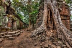 Αρχαίες καταστροφές και ρίζες δέντρων, ναός TA Prohm, Angkor, Καμπότζη Στοκ Φωτογραφία